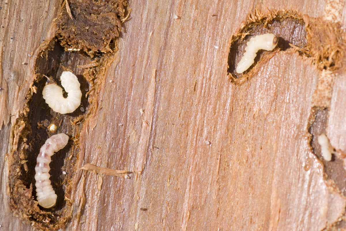 Abba Tectonics Woodworm Specialists